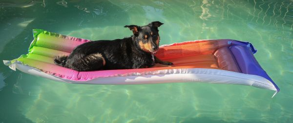 Pets and Australians: Who has what?